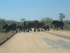 Elephants passing