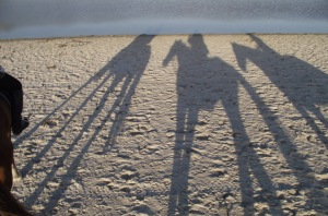 Horse Shadows on Noordhoek beach