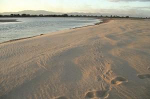 07 Zambezi Crocodile Tracks
