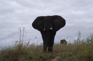 09 Zambezi Mock Charge
