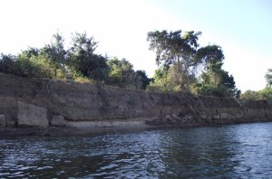 33 Zambezi River bank