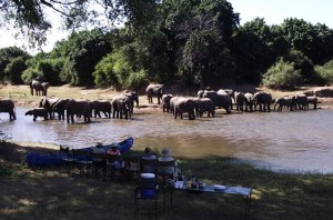 41 Zambezi Elephants