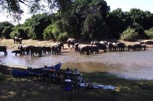 41 Zambezi Elephants