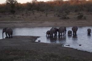 Kruger 2016 (47)